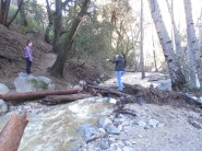 One of the less scary log bridges